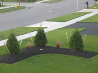 Spruce landscaping berm in Lancaster